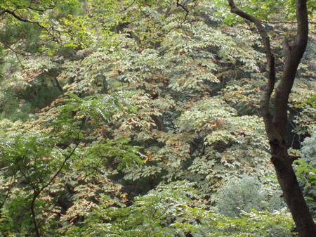 Anfang November sollten die Blätter langsam orange und rot werden