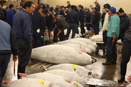 Big Tuna Auction