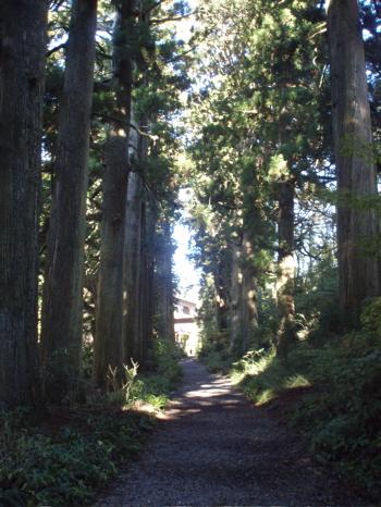 Und so sieht der Weg heute aus. Teile des uralten Tokaido Fusswegs sind noch erhalten. Damit die Reise angenehmer ist, wurden hohe Bäume gepflanzt, die Schatten spenden.