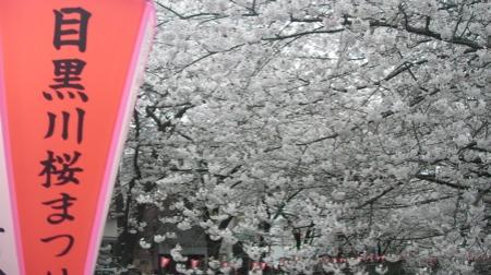 Meguro Gawa Sakura Matsuri
